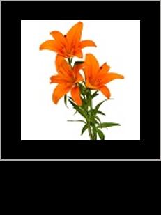 07_flor numerada